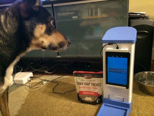 IcPooch dispensing treats during our review.