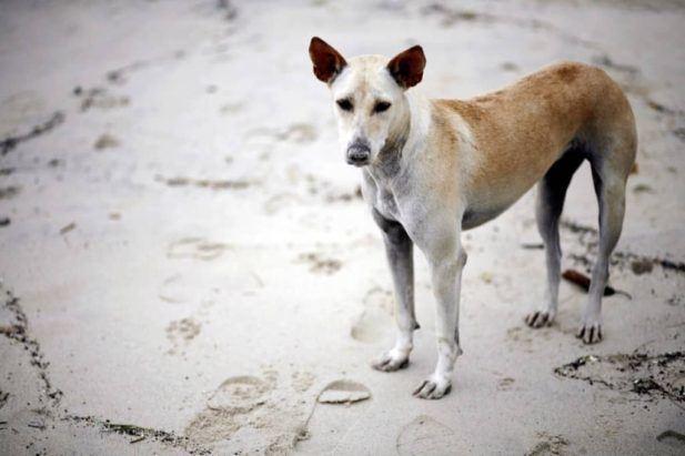GPS Dog Collars