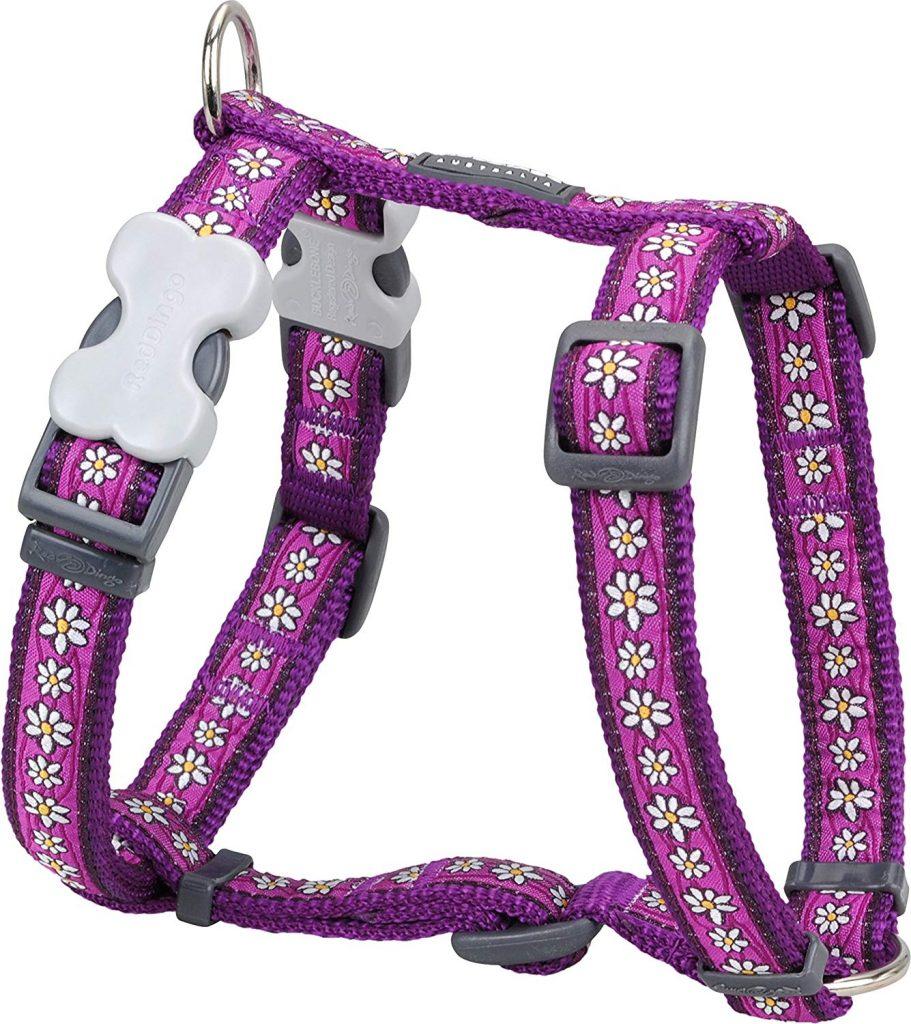 Red Dingo's Designer Harness
