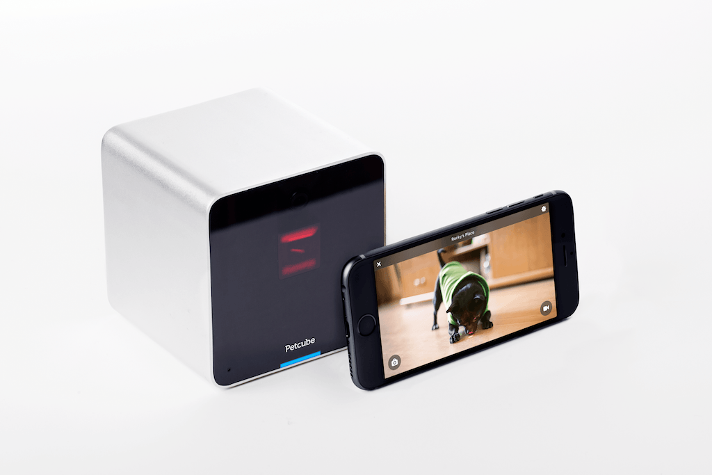 Petcube camera and phone under review