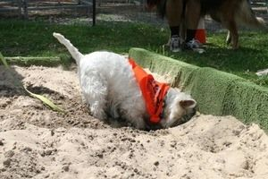 Small dog digging hole in sand pit
