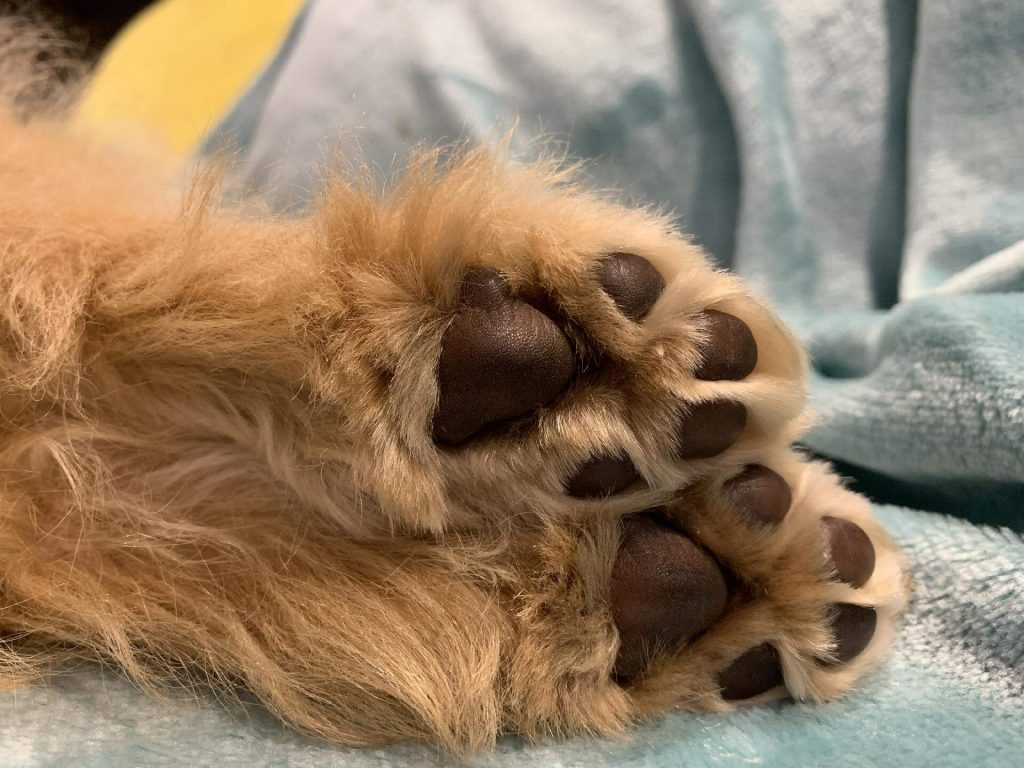 Hairy paws that can get stuck in nail grinder