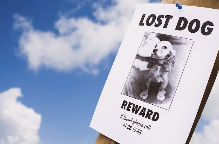 Put Up lost dog flyers and ads