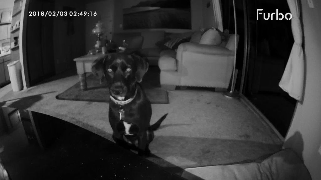 Night vision view from the Furbo Camera is really good.