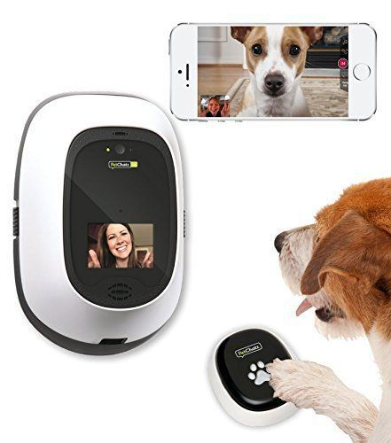 Dog operating Petchatz with Pawcall