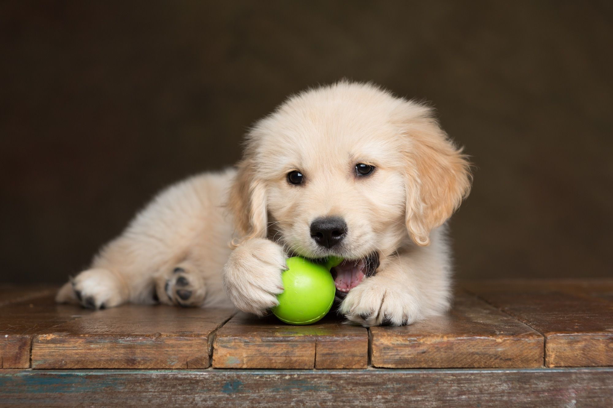 Best Puppy Chew Toys That are Safe And Durable