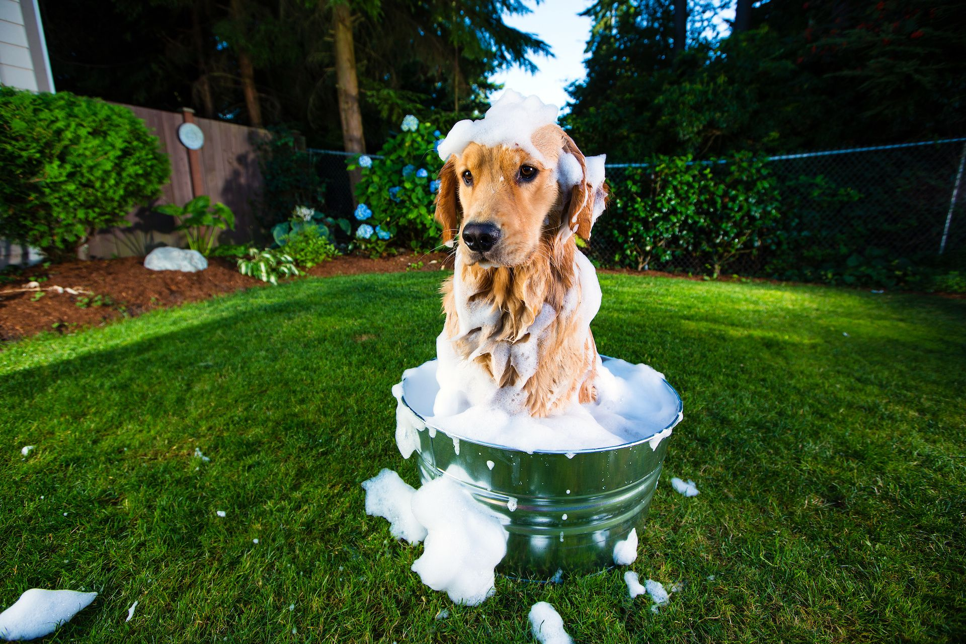 7 Best Shampoos for Dogs That Shed (a lot)