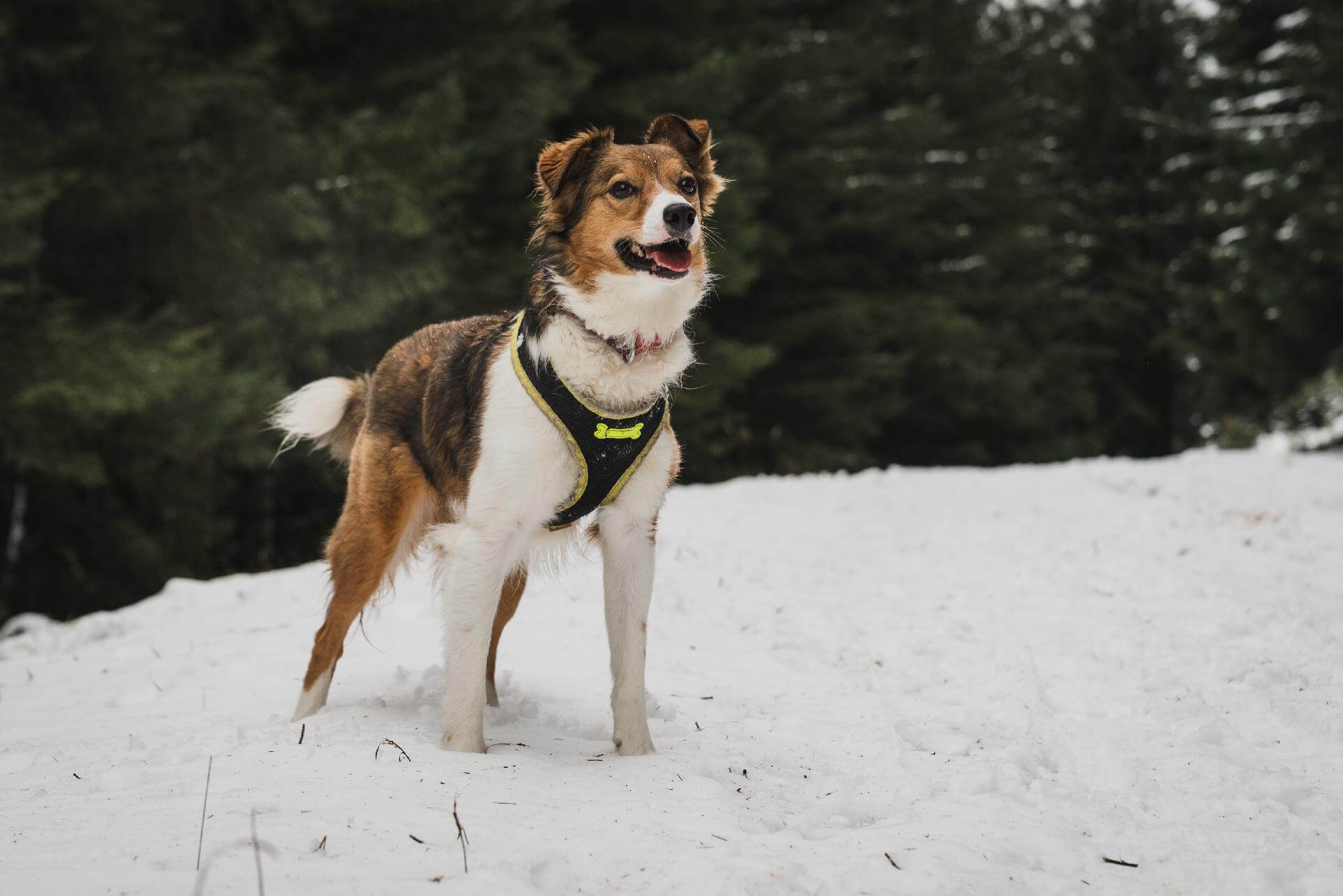 The Best Escape Proof Dog Harness